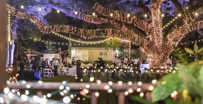 Purple Lights and Oak Tree Manor