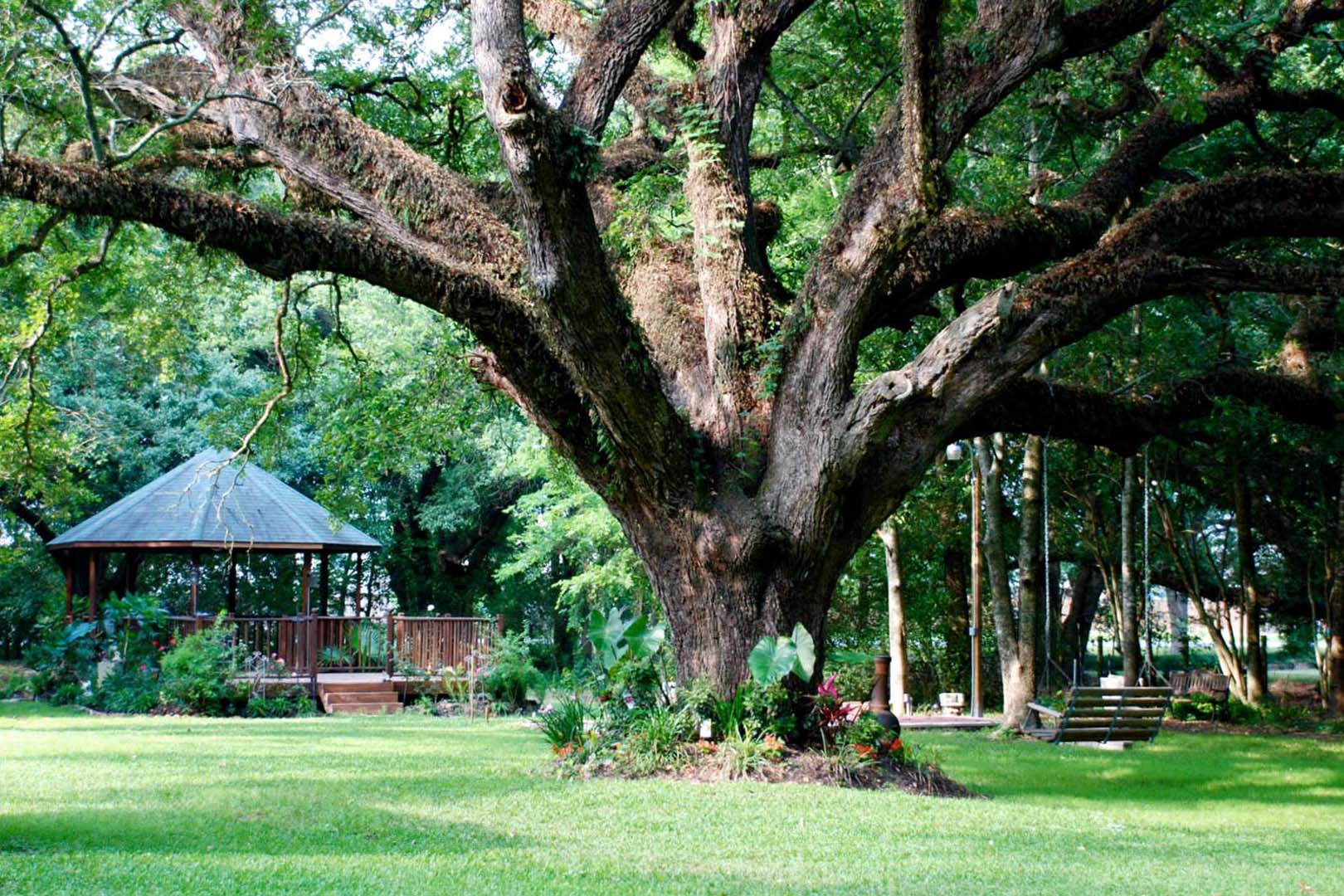 Live Oak and Gazebo
